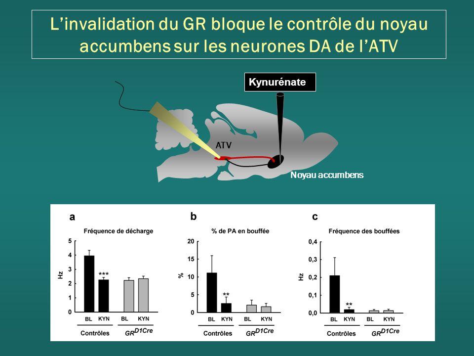 L'invalidation du GR bloque le contrôle du noyau accumbens sur les neurones DA de l'ATV
