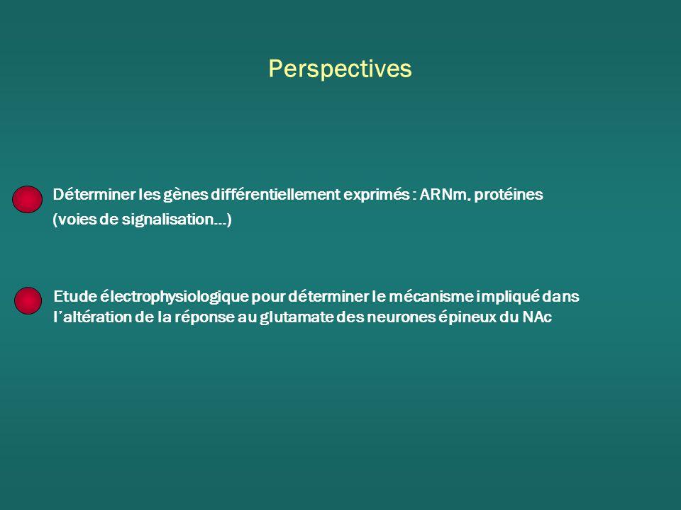Perspectives Déterminer les gènes différentiellement exprimés : ARNm, protéines. (voies de signalisation…)