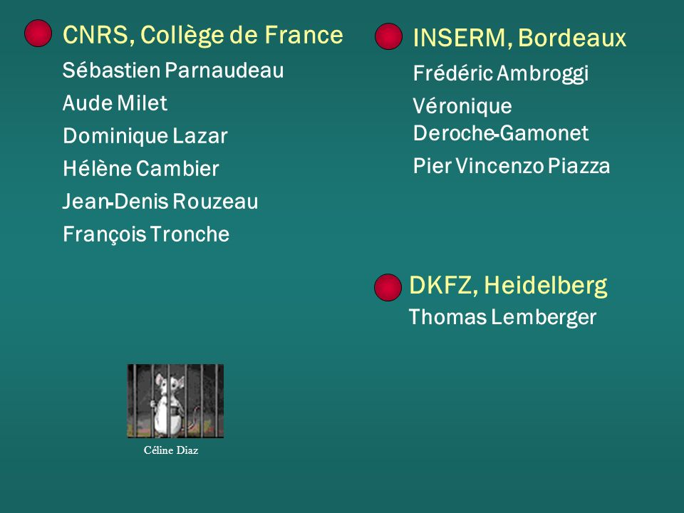 CNRS, Collège de France INSERM, Bordeaux DKFZ, Heidelberg