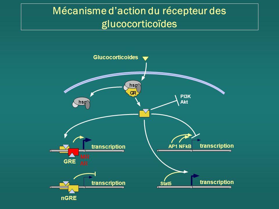 Mécanisme d'action du récepteur des glucocorticoïdes