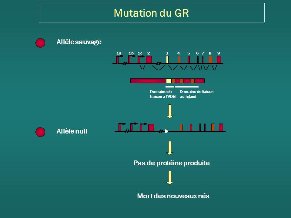 Mutation du GR Allèle sauvage Allèle null Pas de protéine produite