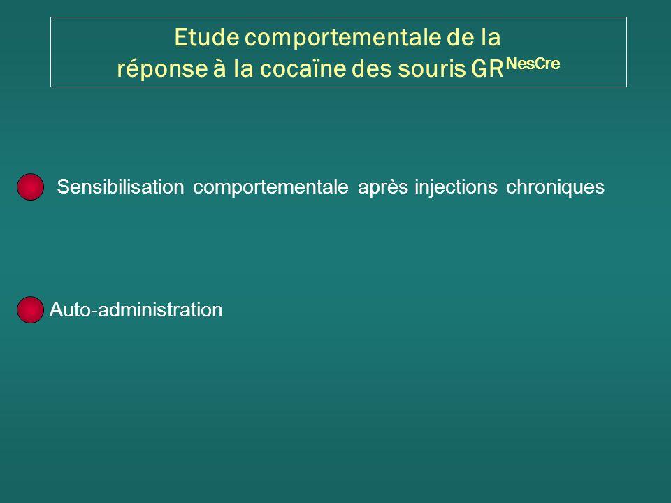 Etude comportementale de la réponse à la cocaïne des souris GRNesCre