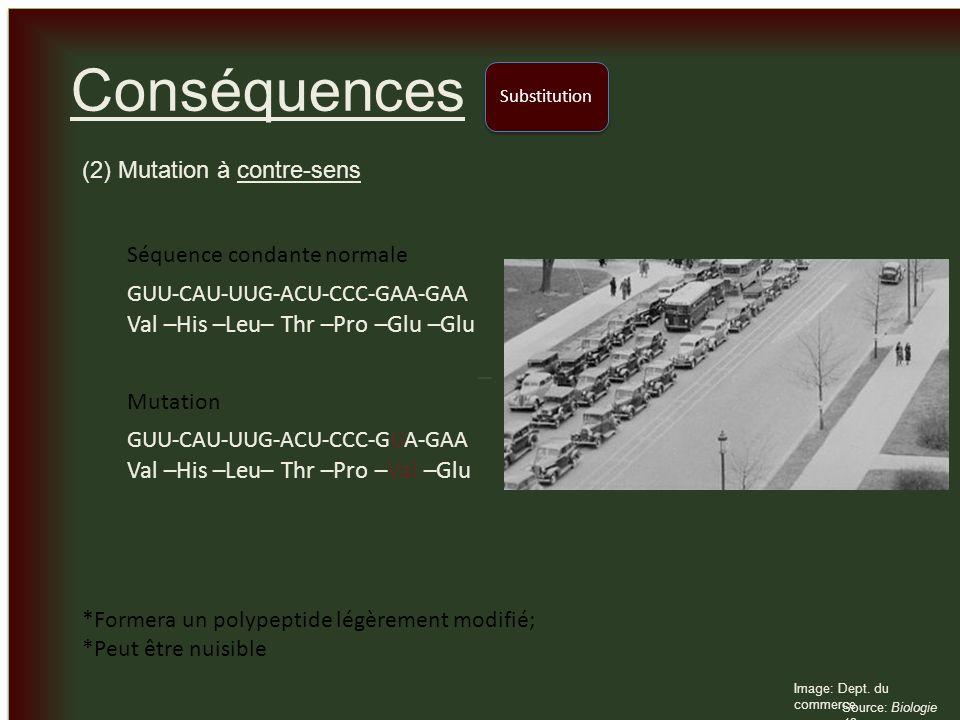 Conséquences Val –His –Leu– Thr –Pro –Glu –Glu