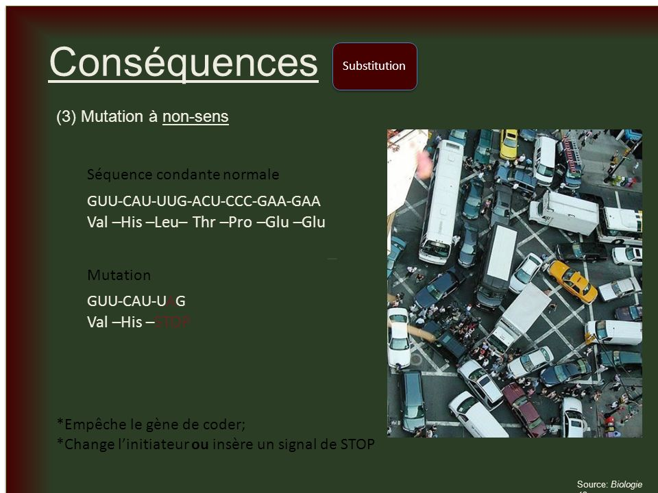 Conséquences Val –His –Leu– Thr –Pro –Glu –Glu Val –His –STOP