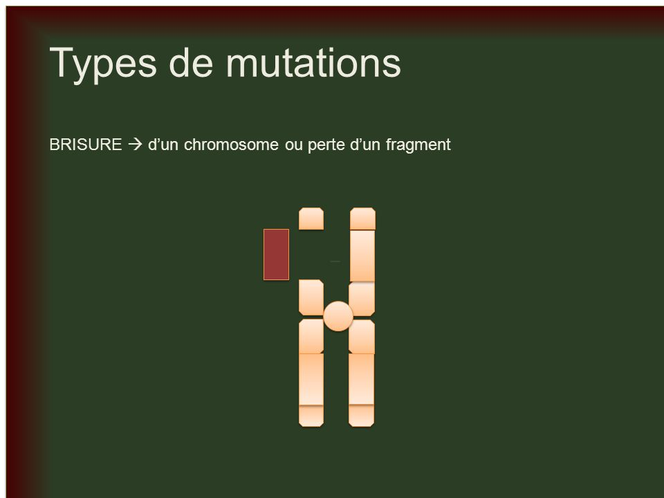 _ Types de mutations BRISURE  d'un chromosome ou perte d'un fragment