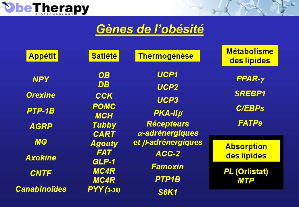 Métabolisme des lipides Récepteurs a-adrénergiques et b-adrénergiques