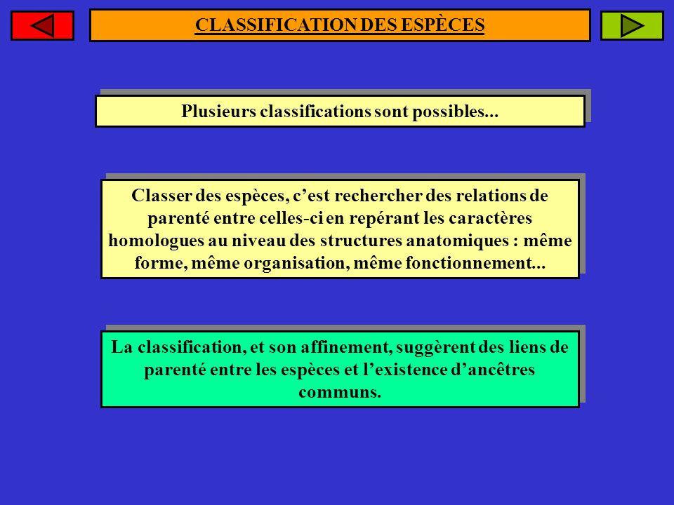 CLASSIFICATION DES ESPÈCES Plusieurs classifications sont possibles...