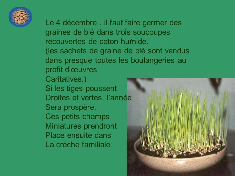 . Le 4 décembre , il faut faire germer des graines de blé dans trois soucoupes recouvertes de coton humide.