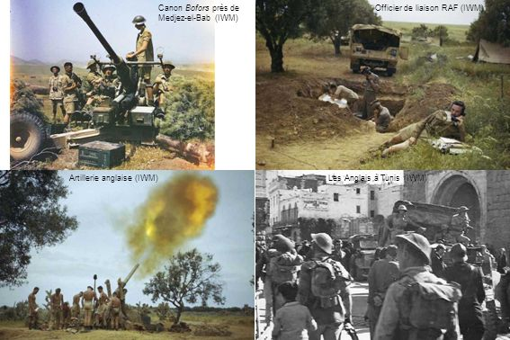 Canon Bofors près de Medjez-el-Bab (IWM)