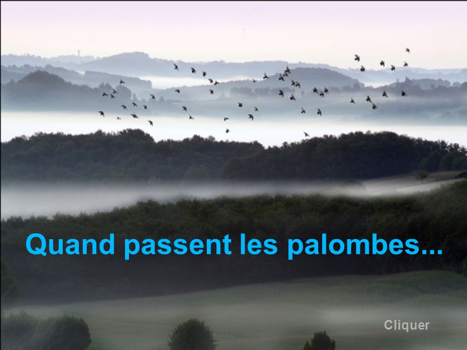Quand passent les palombes...