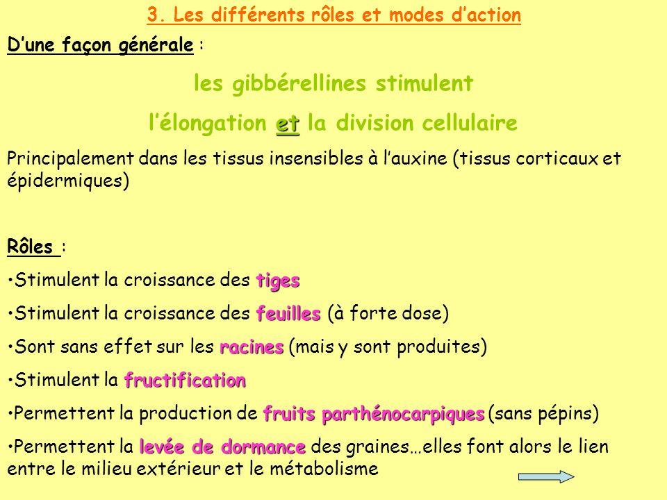 les gibbérellines stimulent l'élongation et la division cellulaire