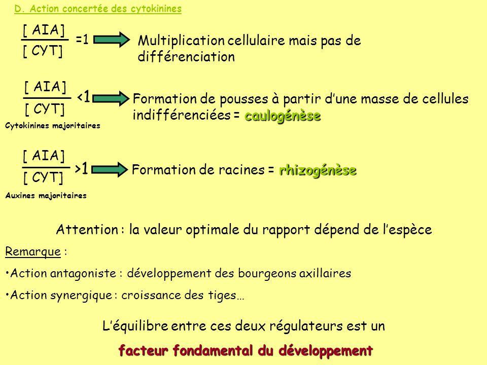 D. Action concertée des cytokinines