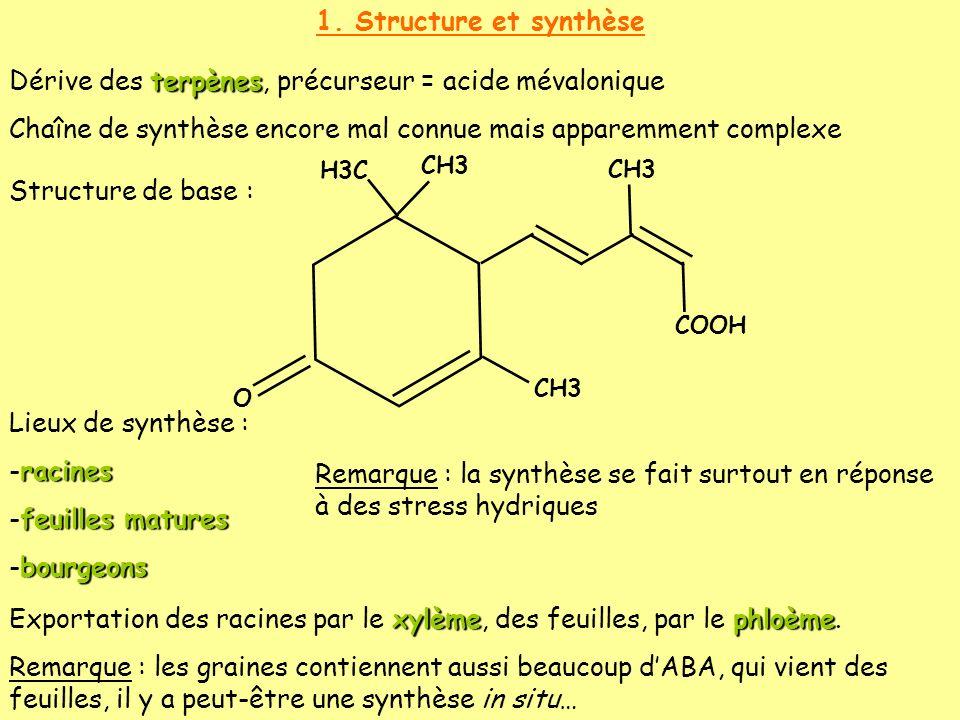 Dérive des terpènes, précurseur = acide mévalonique