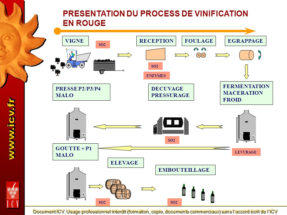 PRESENTATION DU PROCESS DE VINIFICATION EN ROUGE