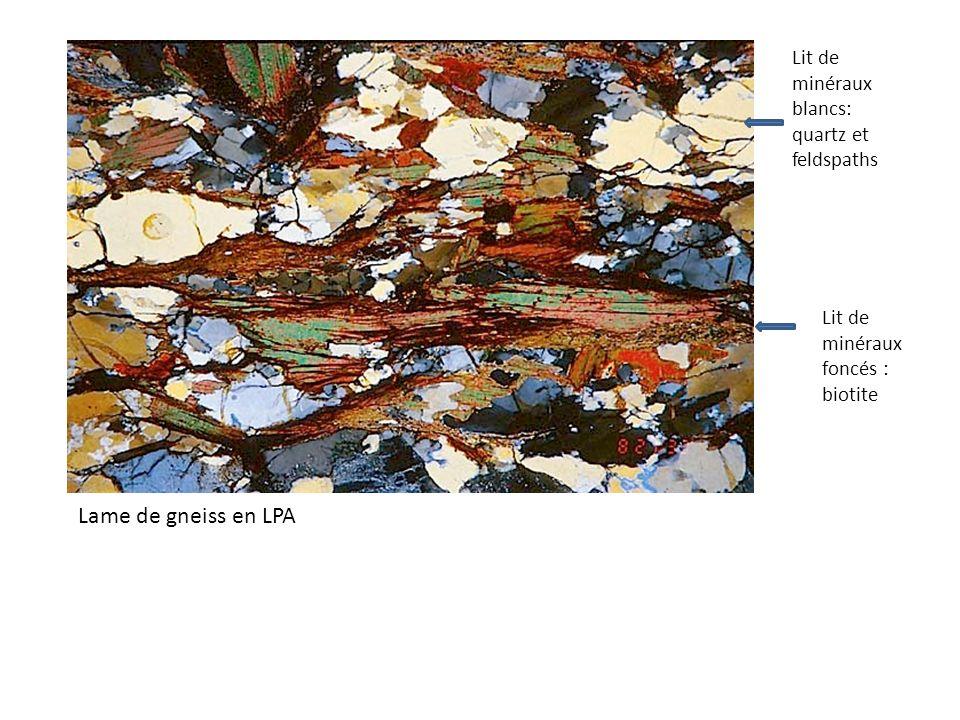 Lame de gneiss en LPA Lit de minéraux blancs: quartz et feldspaths