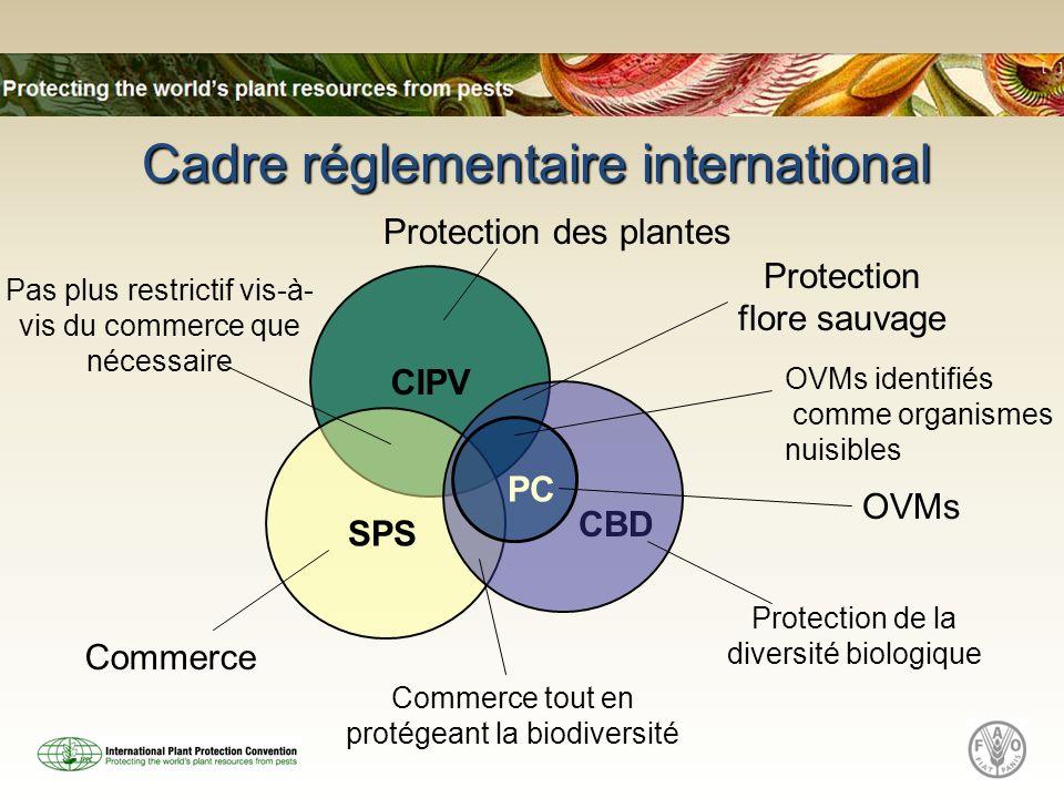 Cadre réglementaire international