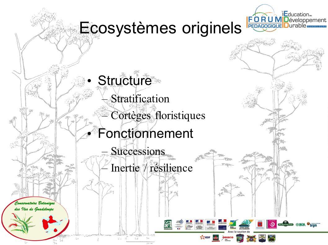 Ecosystèmes originels