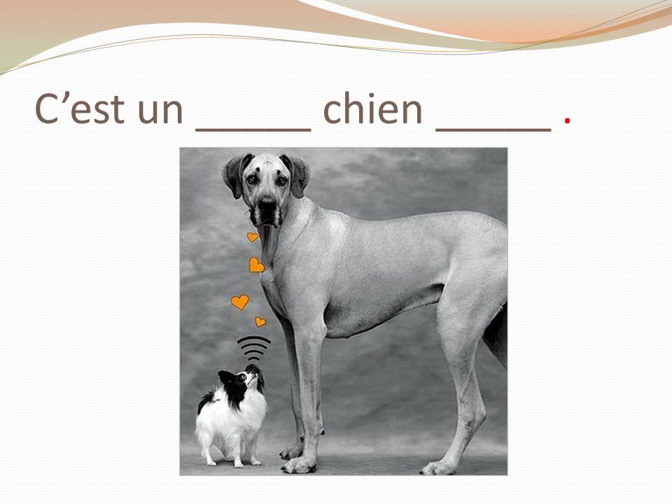 C'est un _____ chien _____ .
