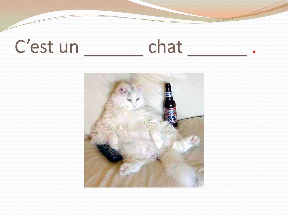 C'est un ______ chat ______ .