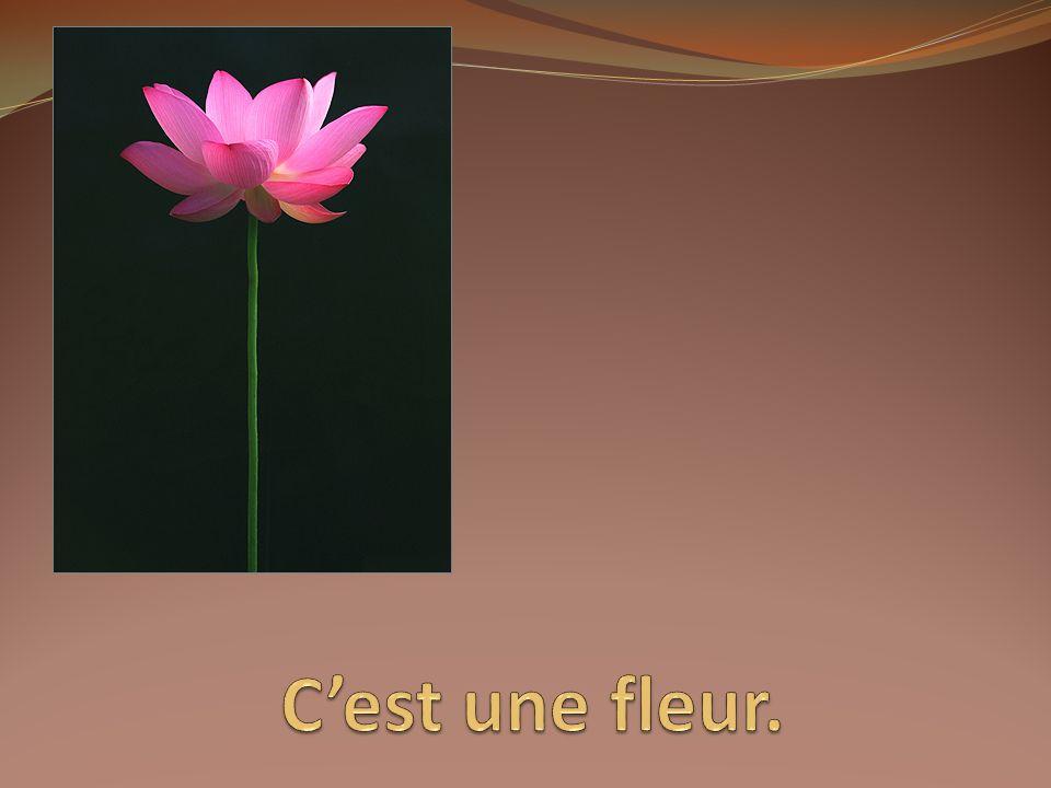 C'est une fleur.