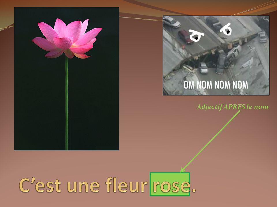 Adjectif APRES le nom C'est une fleur rose.