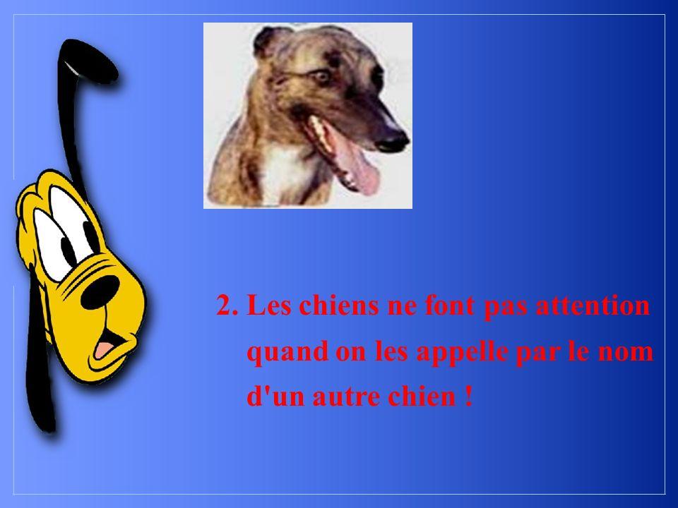 2. Les chiens ne font pas attention