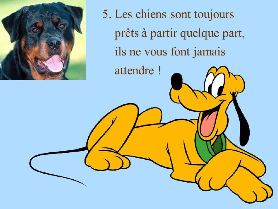 5. Les chiens sont toujours