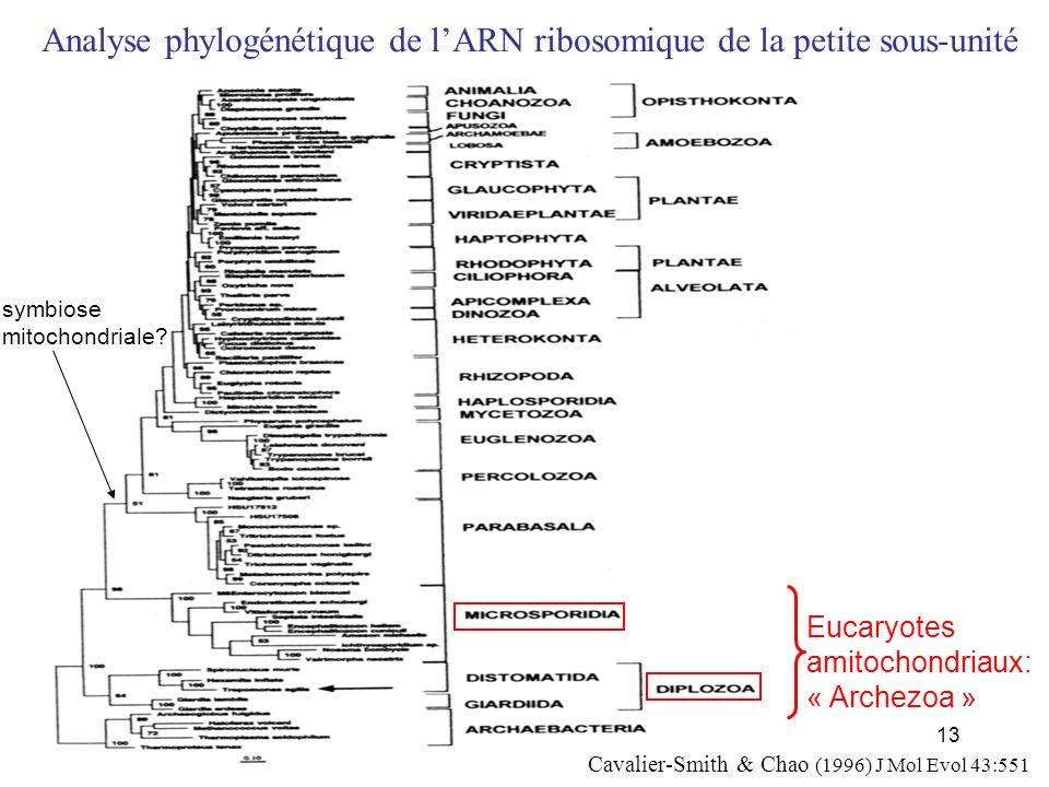 Analyse phylogénétique de l'ARN ribosomique de la petite sous-unité