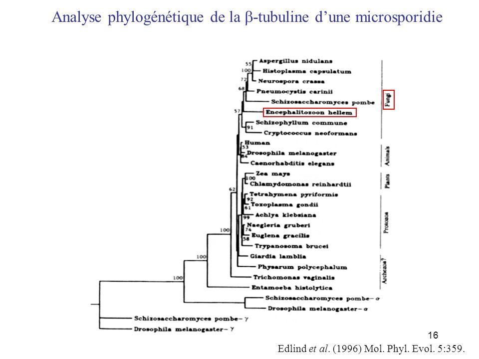 Analyse phylogénétique de la b-tubuline d'une microsporidie