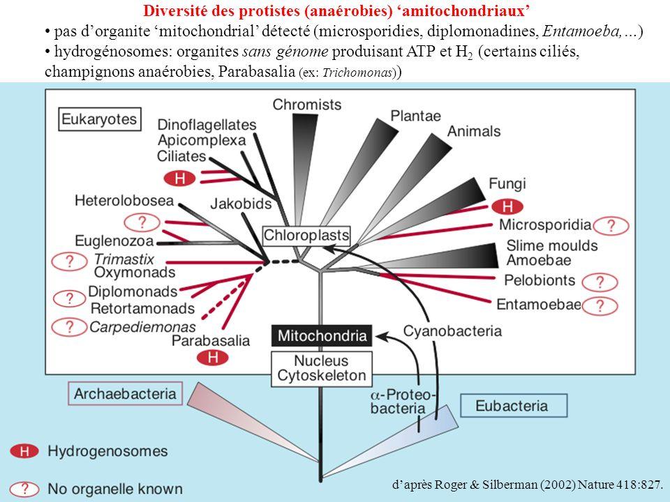 Diversité des protistes (anaérobies) 'amitochondriaux'
