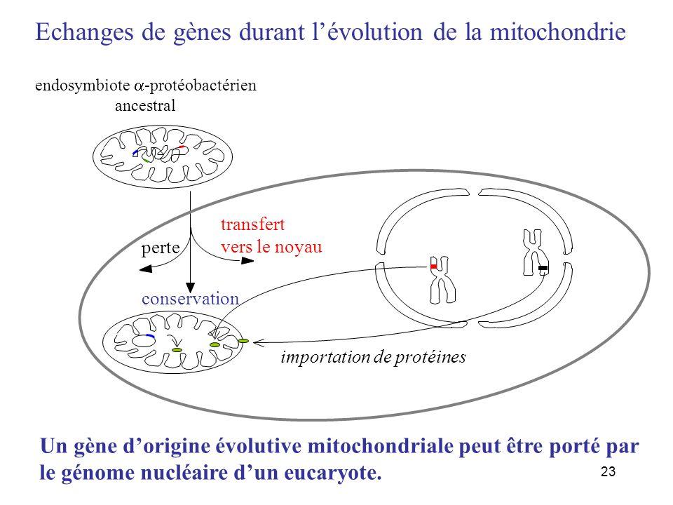 endosymbiote a-protéobactérien