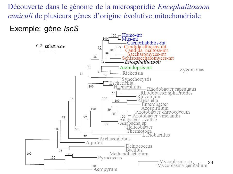 Découverte dans le génome de la microsporidie Encephalitozoon cuniculi de plusieurs gènes d'origine évolutive mitochondriale