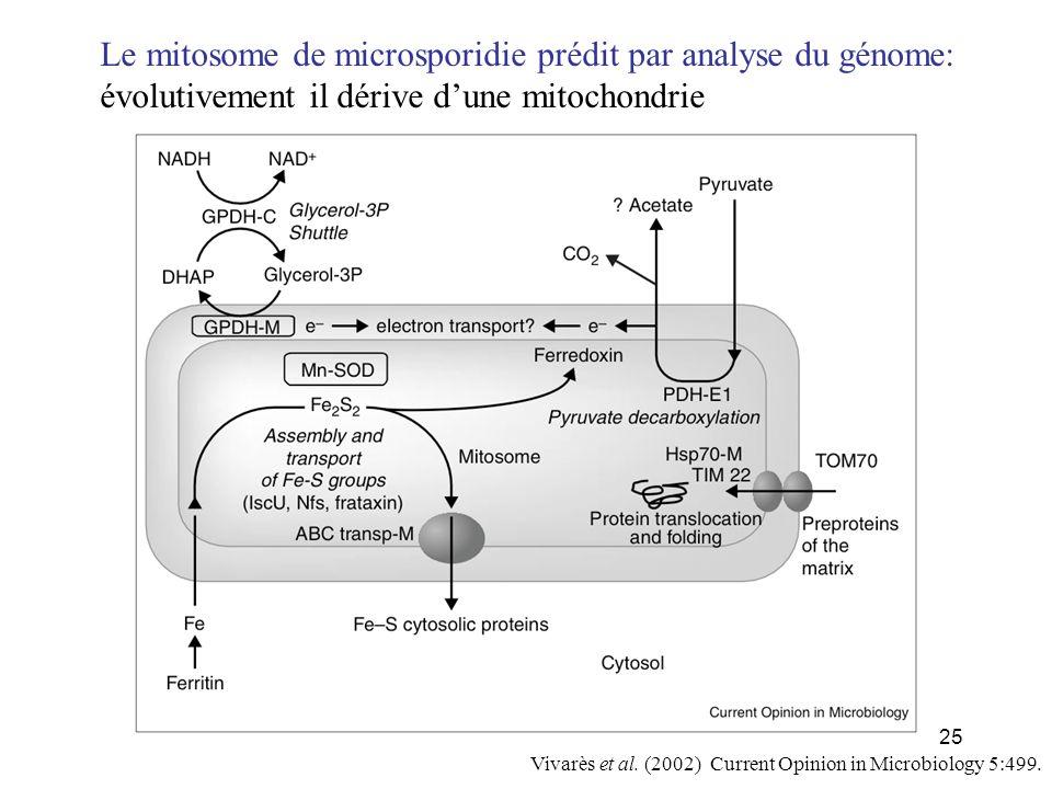 Le mitosome de microsporidie prédit par analyse du génome: évolutivement il dérive d'une mitochondrie