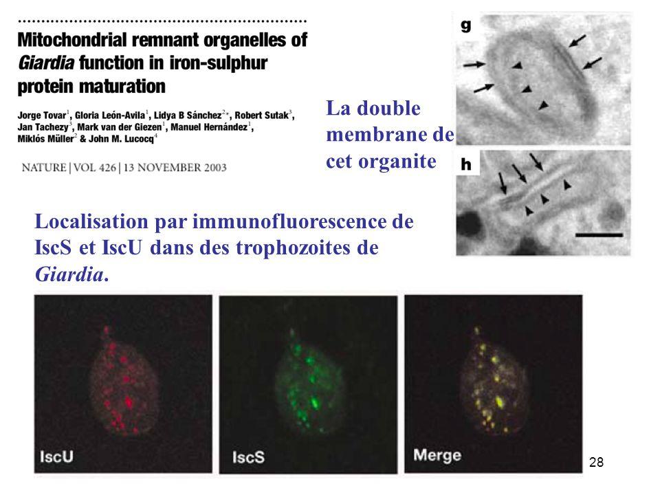 La double membrane de cet organite