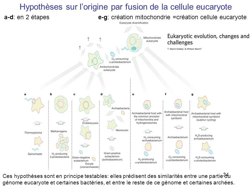 Hypothèses sur l'origine par fusion de la cellule eucaryote