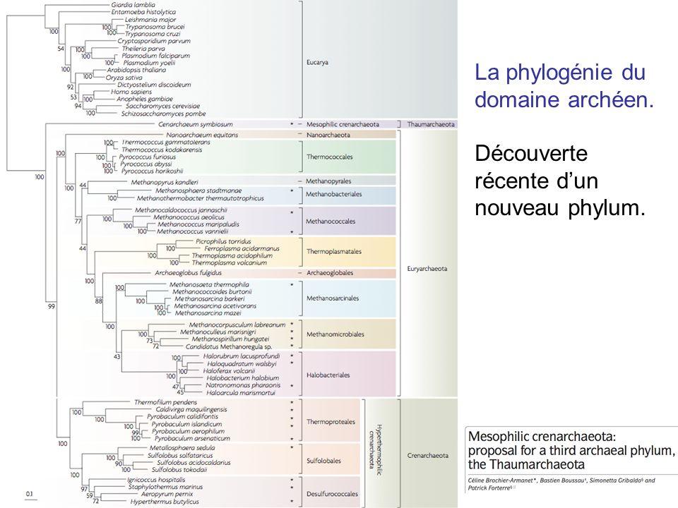 La phylogénie du domaine archéen.