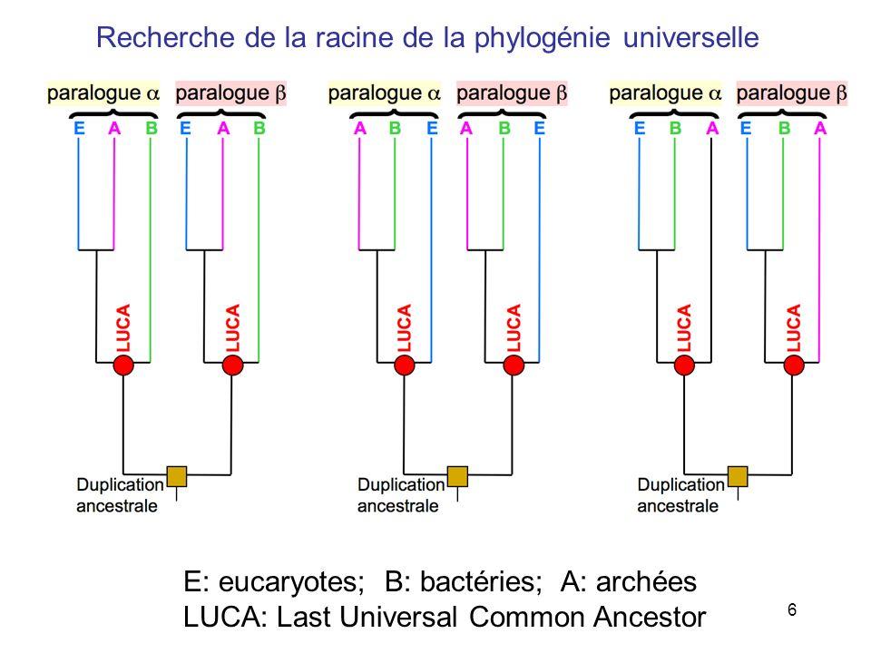 Recherche de la racine de la phylogénie universelle
