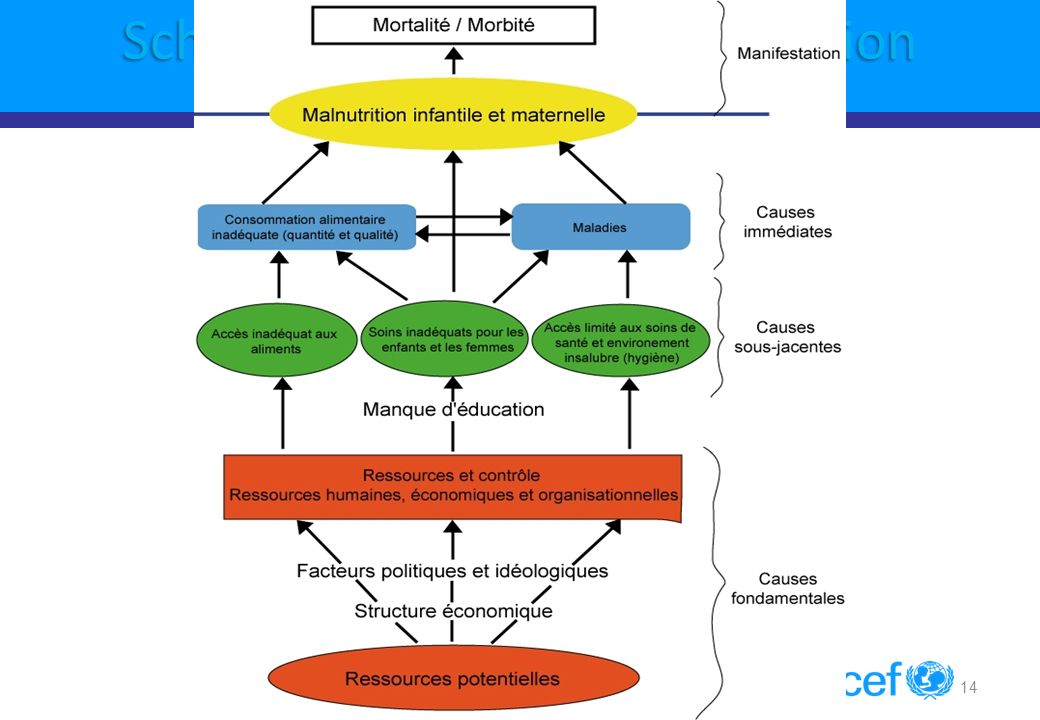 Schema causal de la Malnutrition