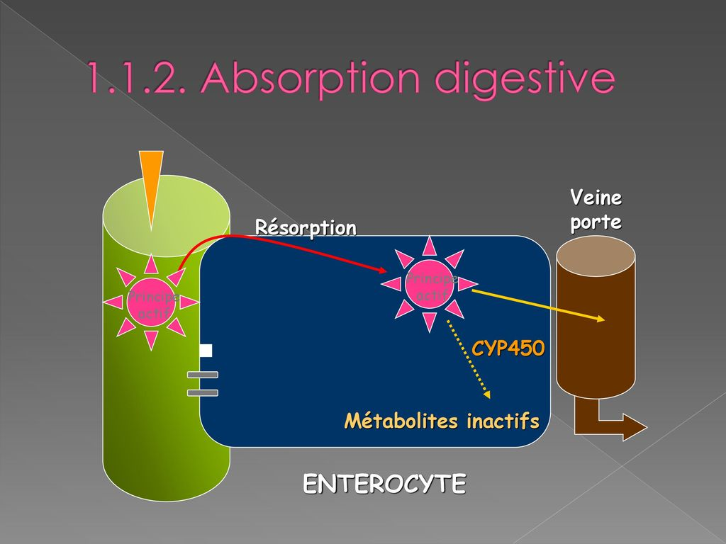 Absorption digestive ENTEROCYTE Veine porte Résorption CYP450