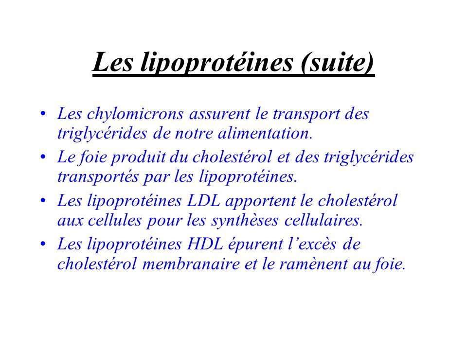 Les lipoprotéines (suite)
