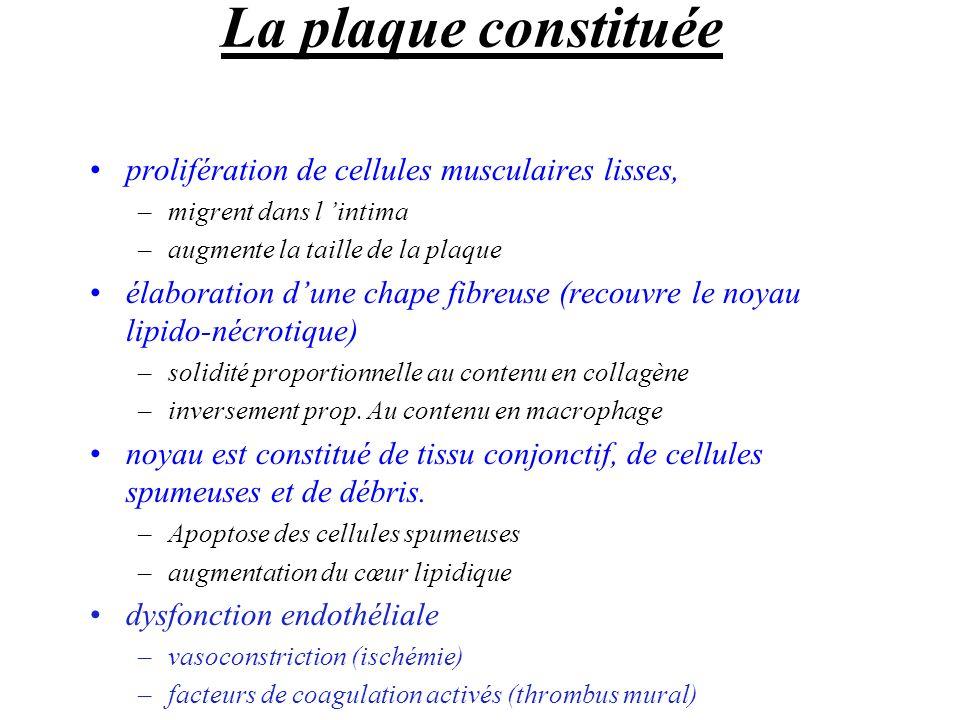 La plaque constituée prolifération de cellules musculaires lisses,