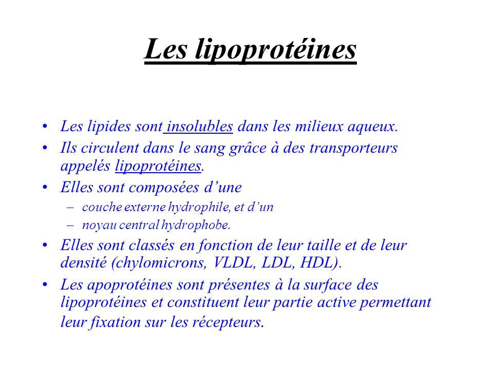 Les lipoprotéines Les lipides sont insolubles dans les milieux aqueux.
