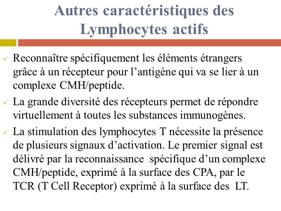 Autres caractéristiques des Lymphocytes actifs
