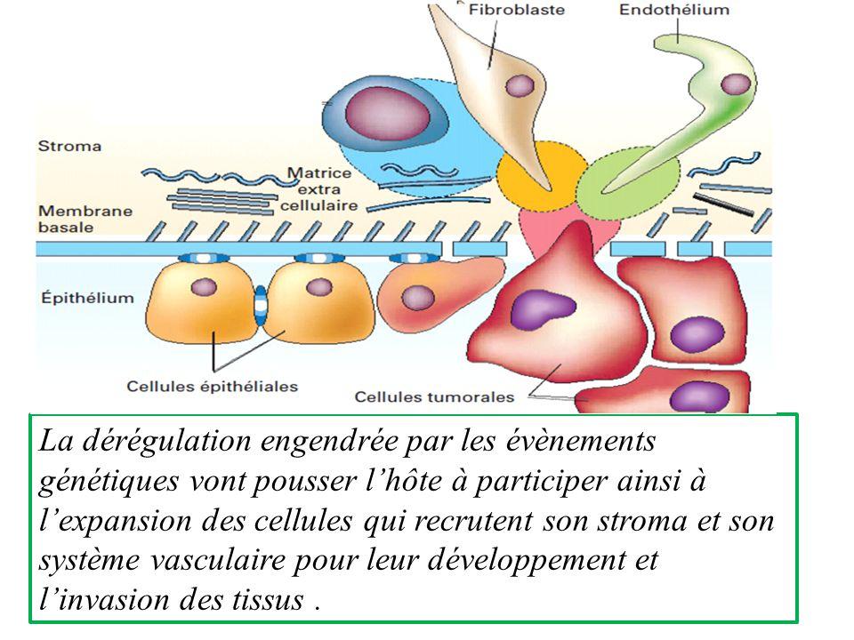 La dérégulation engendrée par les évènements génétiques vont pousser l'hôte à participer ainsi à l'expansion des cellules qui recrutent son stroma et son système vasculaire pour leur développement et l'invasion des tissus .
