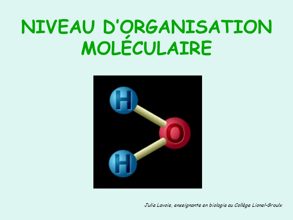 NIVEAU D'ORGANISATION MOLÉCULAIRE