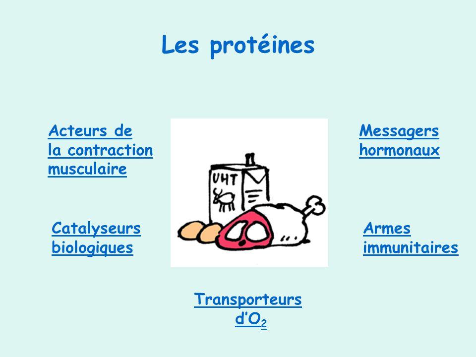 Les protéines Acteurs de la contraction musculaire Messagers hormonaux