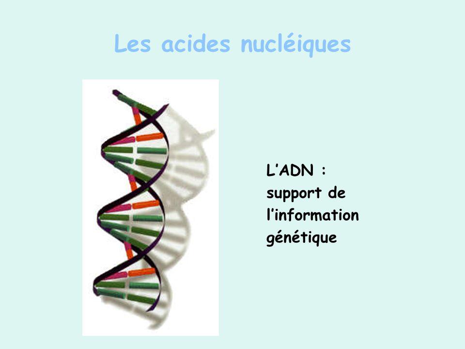 Les acides nucléiques L'ADN : support de l'information génétique