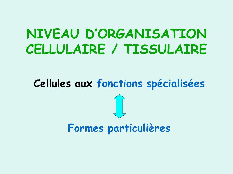 NIVEAU D'ORGANISATION CELLULAIRE / TISSULAIRE