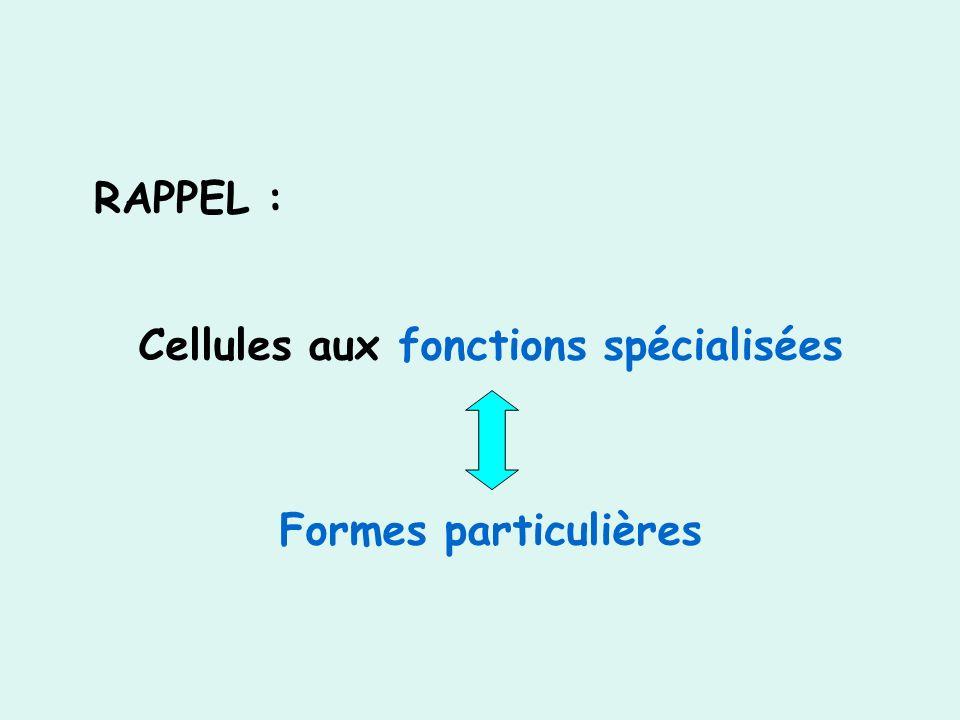 Cellules aux fonctions spécialisées