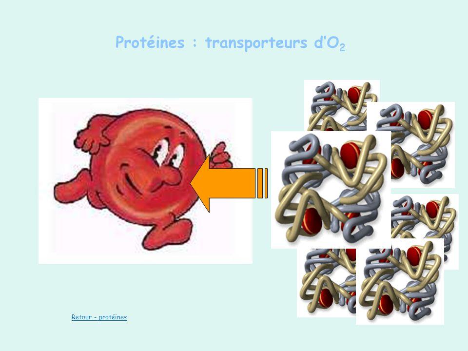 Protéines : transporteurs d'O2